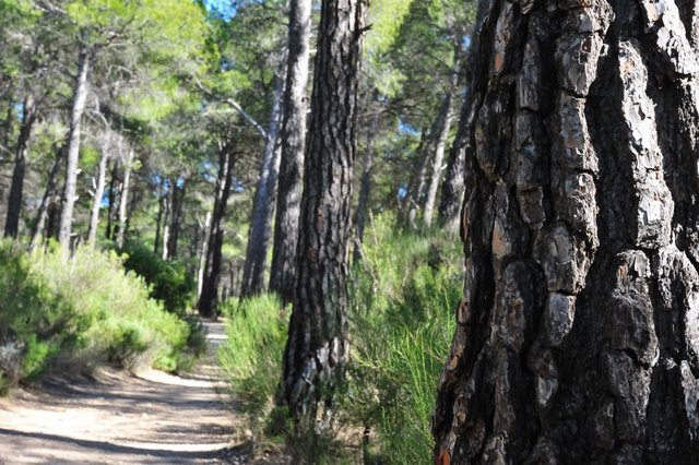 Family walks in the Sierra Espuña, the Route of the Dinosaur
