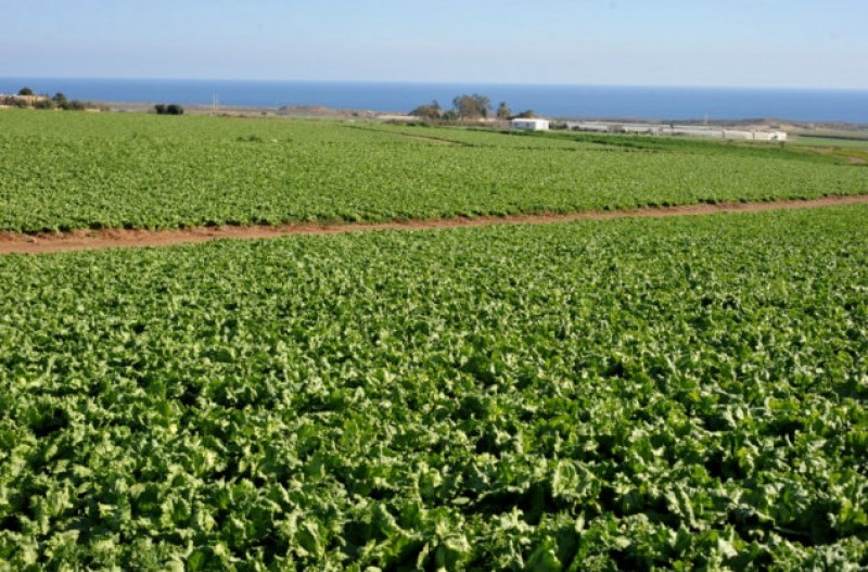 Agricultural land sales up by 20 per cent in Murcia