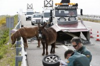Horse and donkey survive Zaragoza car crash in which two were seriously injured