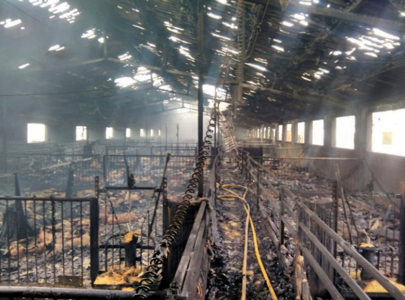 <span style='color:#780948'>ARCHIVED</span> - A thousand pigs incinerated in Puerto Lumbreras fire