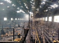 A thousand pigs incinerated in Puerto Lumbreras fire