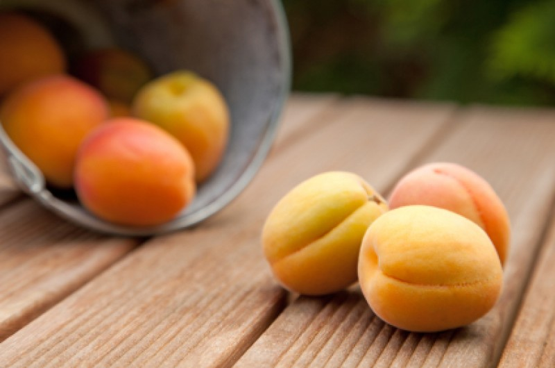 <span style='color:#780948'>ARCHIVED</span> - Mula apricot farmers suffer effects of March heatwave