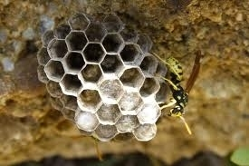 Dealing with unwanted bee and wasp nests