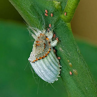 Natural insecticide for use against Spanish garden pests