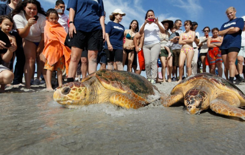 National sea turtle recovery campaign to begin in San Pedro del Pinatar