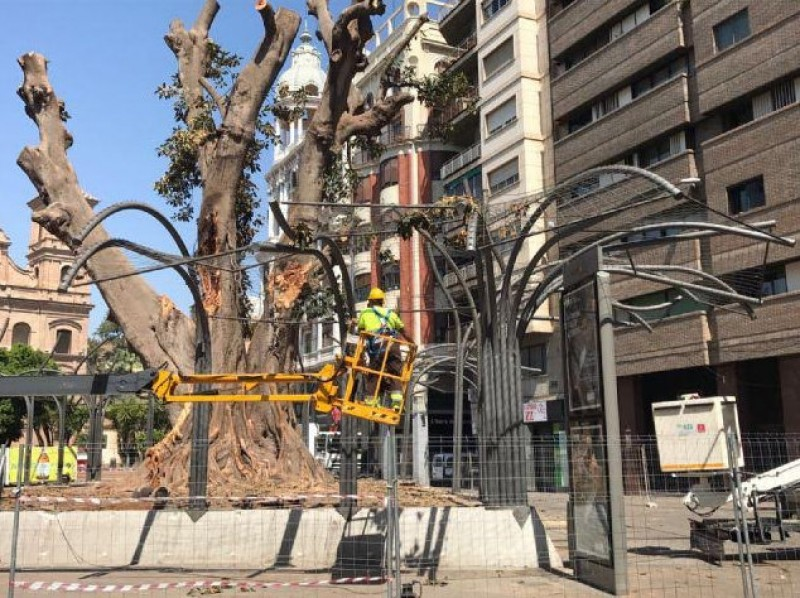 <span style='color:#780948'>ARCHIVED</span> - The Santo Domingo ficus in Murcia is now 60 tons lighter and in intensive care