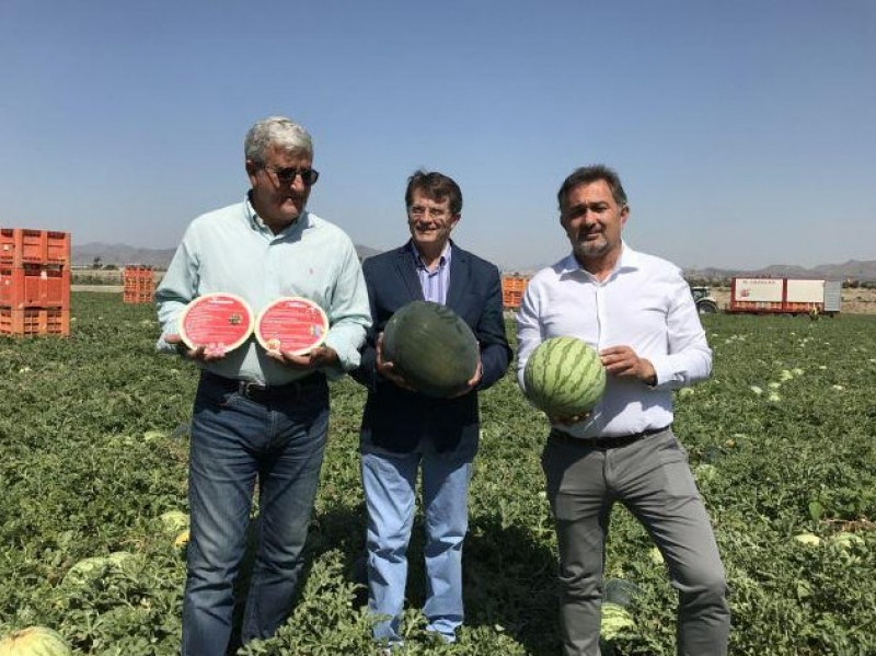 If you're thirsty, eat a Lorca water melon!​