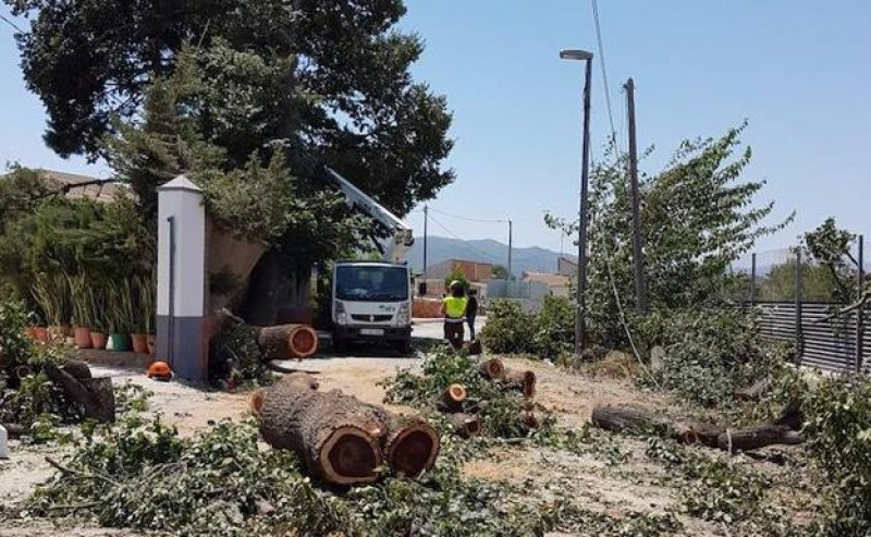 Collapsing elms highlight hydrological stress of trees in Murcia