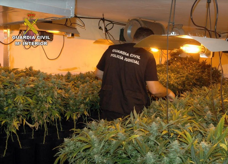 Three arrested at clandestine marijuana plantation in Mula