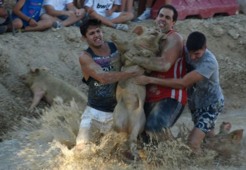 Ceutí pig wrestling contest consigned to history