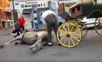 Cadiz animal rights activists outraged as horse suffers heat stroke