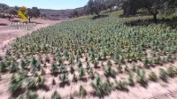 Guardia Civil follow their noses to massive Huelva marijuana plantation