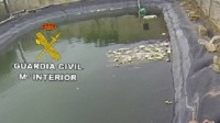 Two drown in Almería attempting to save a dog