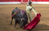 Balearic bullfight ban to be challenged by Spanish government