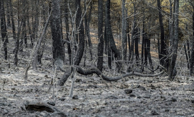 Albacete wild fire brought under control after six days