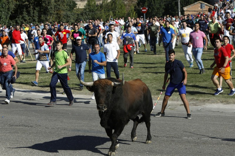 Bloodless Toro de la Vega but bullfights and bullruns increase in number across Spain