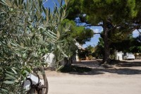 30th September guided tour of Yecla olive mill and cultural route