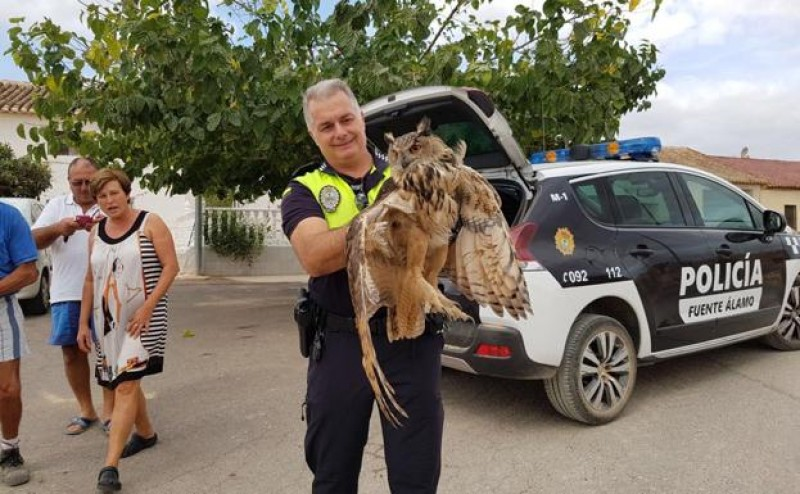 <span style='color:#780948'>ARCHIVED</span> - Eagle owl rescued after suspected electrocution in Fuente Álamo