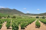 26th October ENGLISH language guided Bullas wine tour