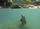 Two otter cubs born at Terra Natura wildlife park in Murcia