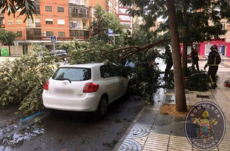 <span style='color:#780948'>ARCHIVED</span> - Fallen trees and strong winds accompany the first rain in Murcia for a month