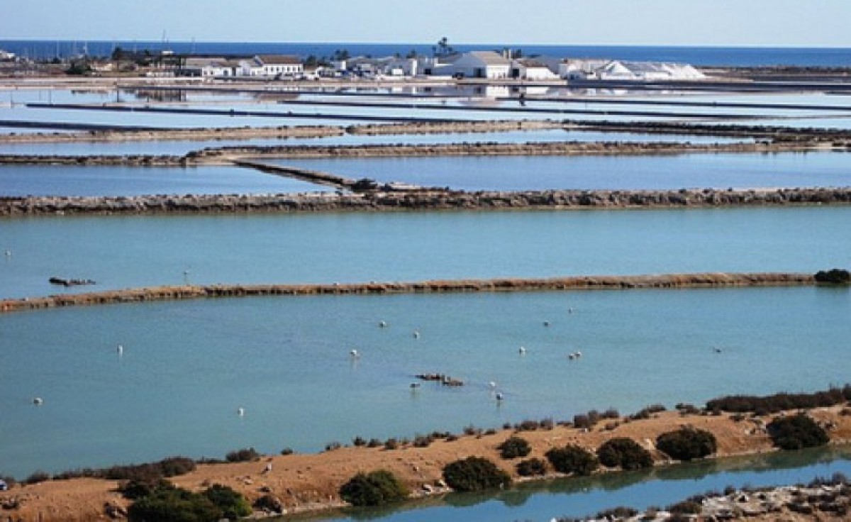 18th November free guided bicycle ride in the San Pedro del Pinatar salt flats