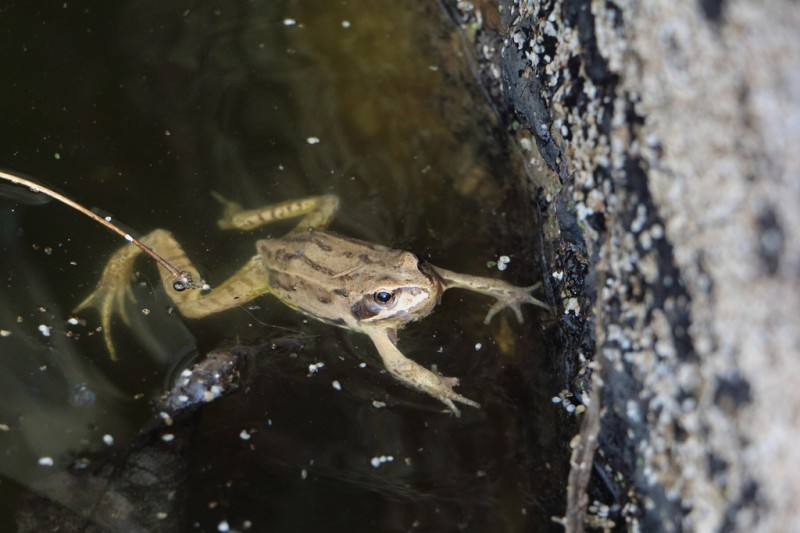 19th November free family activity: discover amphibians in the El Valle regional park