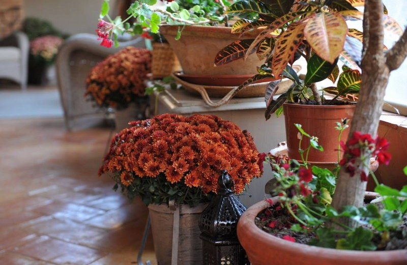<span style='color:#780948'>ARCHIVED</span> - Warm October weather reduces flower quality for All Saints' Day in Murcia