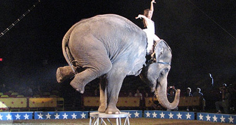 <span style='color:#780948'>ARCHIVED</span> - Circus wild animal act ban comes into force in Murcia