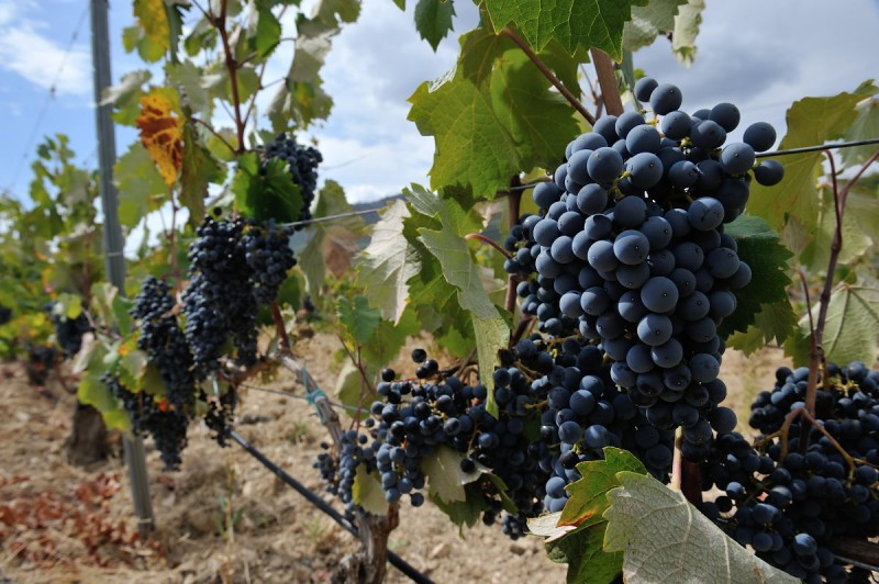 24th November ENGLISH language guided Bullas wine tour (Bodegas Monastrell)