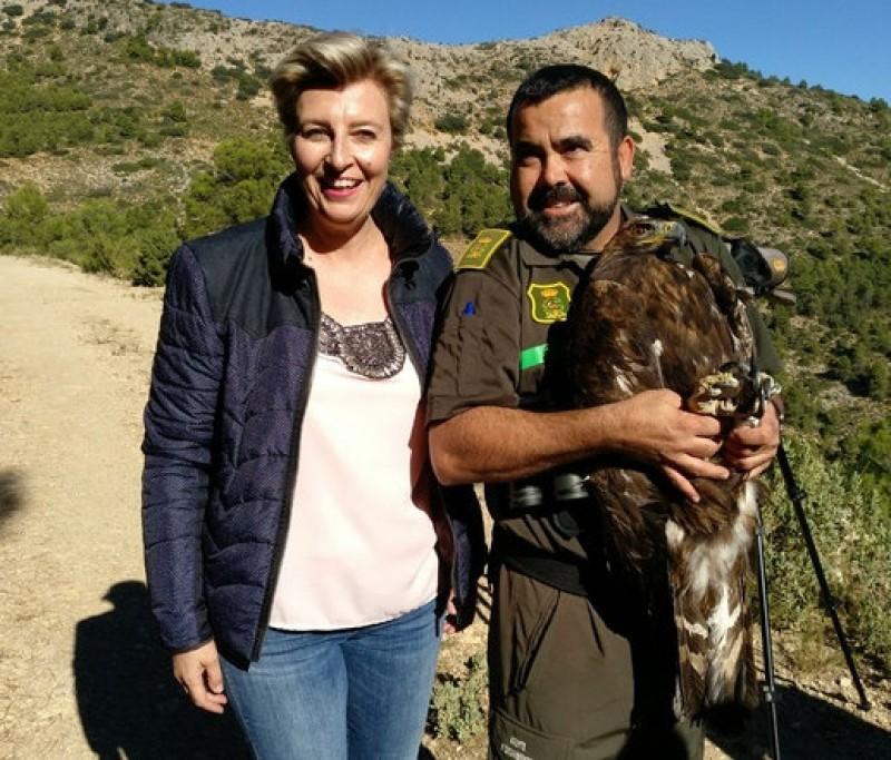 Golden eagle scours an area of 440 km2 to find a new home in north-west Murcia