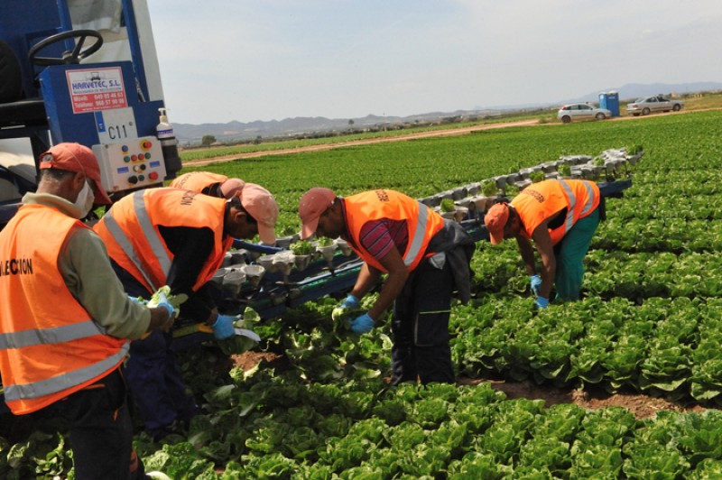 Murcia farmers warn of another winter vegetable shortage