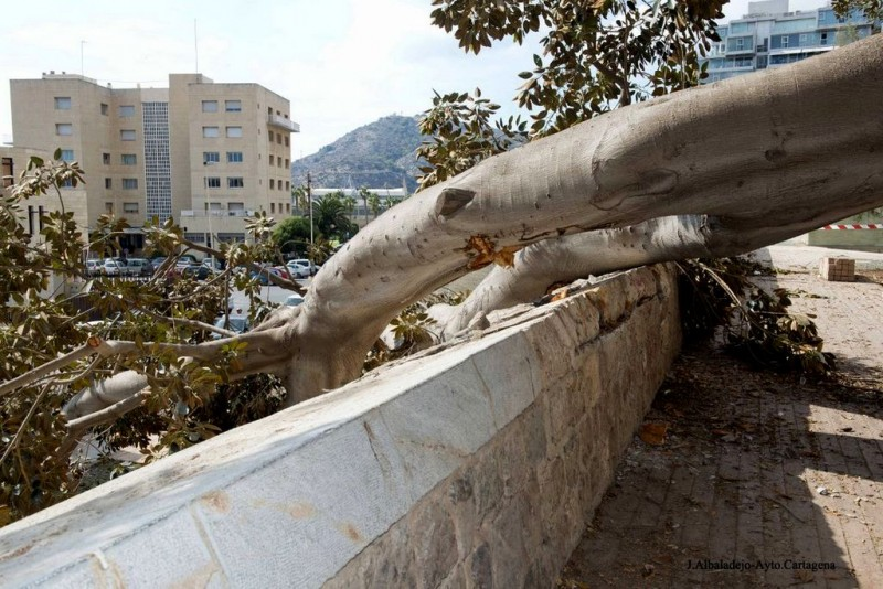<span style='color:#780948'>ARCHIVED</span> - Repairs to historic wall in Cartagena completed after collapse of 20,000 kilo branch