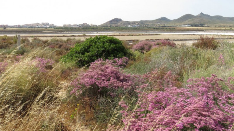<span style='color:#780948'>ARCHIVED</span> - Mar Menor green filter project cut from 40 hectares to just 9