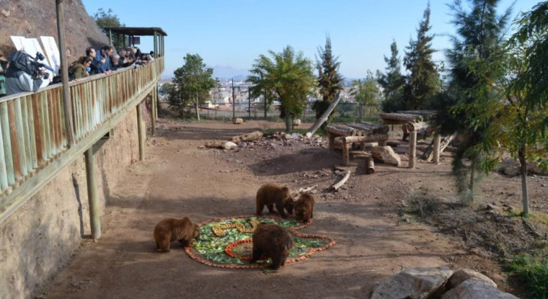 The first brown bears born in Murcia celebrate their 20th birthday