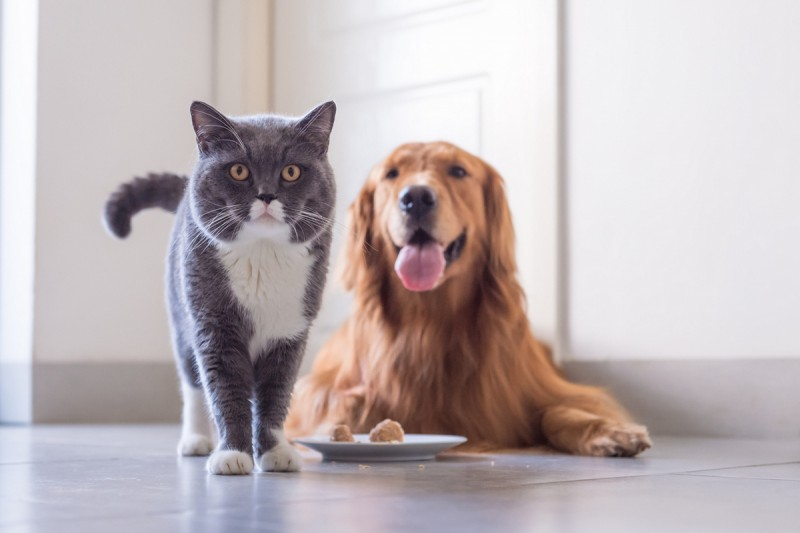 Basic information for pet-owners moving to Spain or taking on new pets