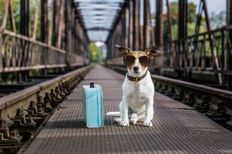 Pet Passports in the EU