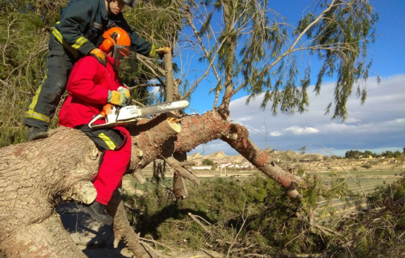 Strong winds on Sunday: dolphin on the beach in Mazarrón and trees down all over Murcia