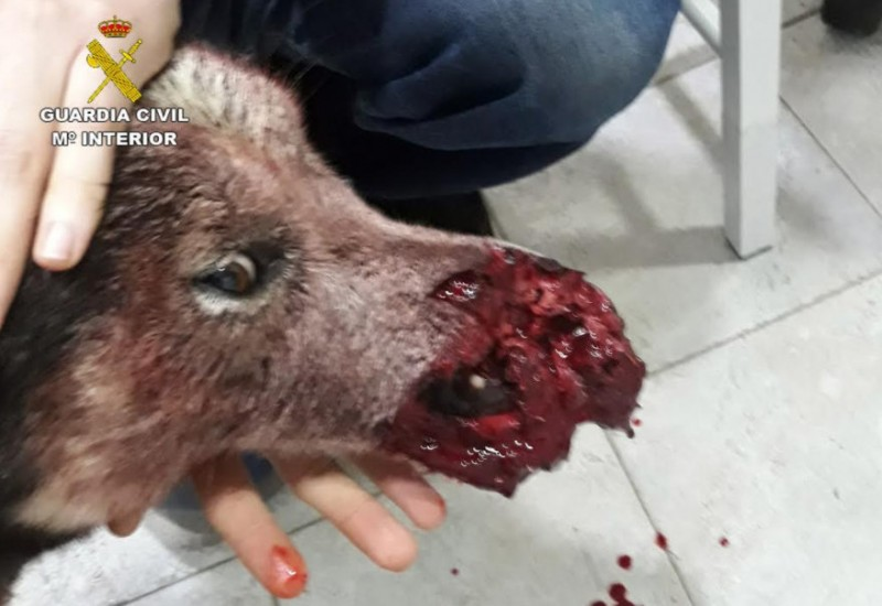 Hunters under investigation after shooting pet dog in Caravaca
