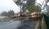 Hurricane-strength winds cause havoc in Galicia