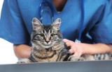 Pet Lovers English-speaking veterinary clinic and pet grooming in Sucina