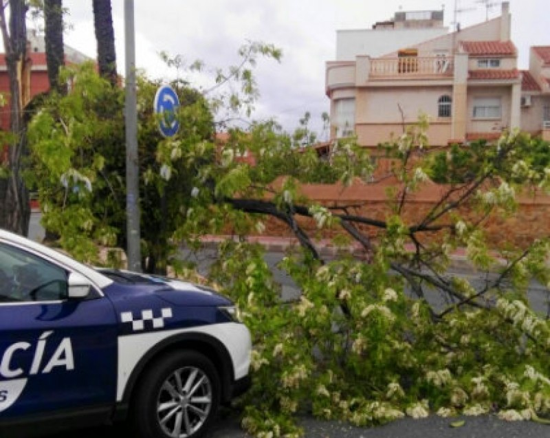 Fallen trees and branches among over 60 incidents as strong winds hit Murcia