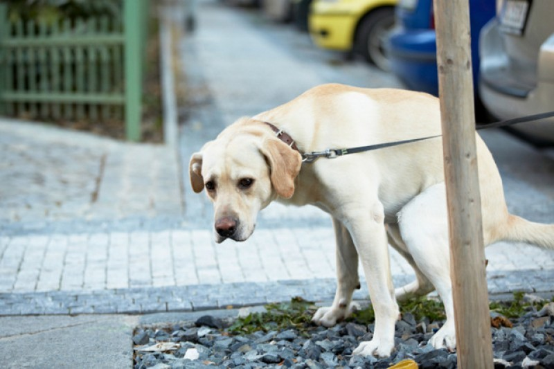 Lorca on crusade to combat dog pooh and urine in the city centre