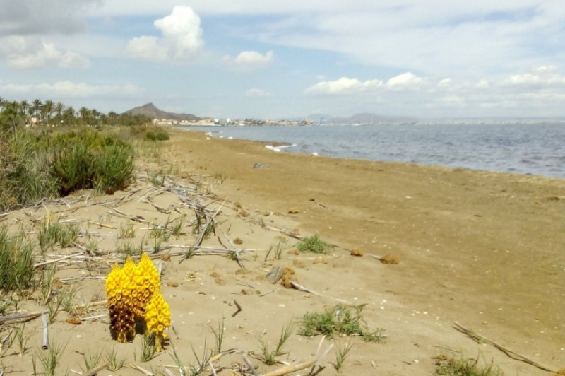 Local Mayors offer their opinions on the proposed Mar Menor protection law
