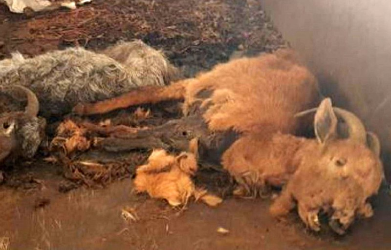 Gruesome scenes of animal neglect at Galicia