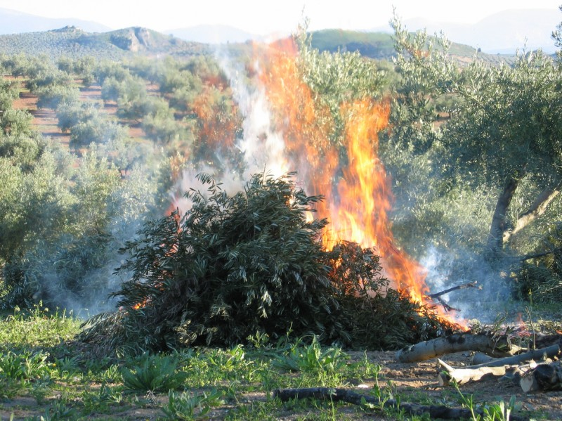 Bonfire licences and disposing of garden rubbish in the Region of Murcia