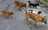 Zero sacrifice stray animal collection contract signed in San Javier