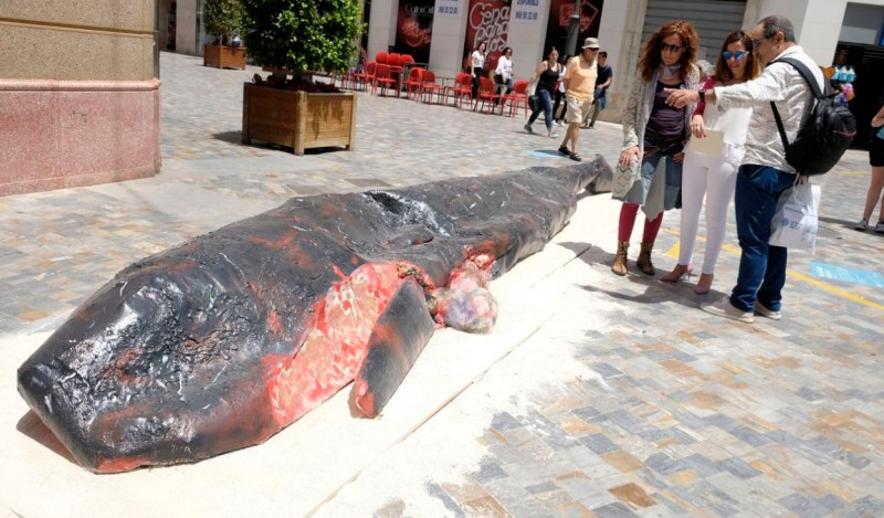 <span style='color:#780948'>ARCHIVED</span> - Dead sperm whale exhibit turns heads at Cartagena art festival
