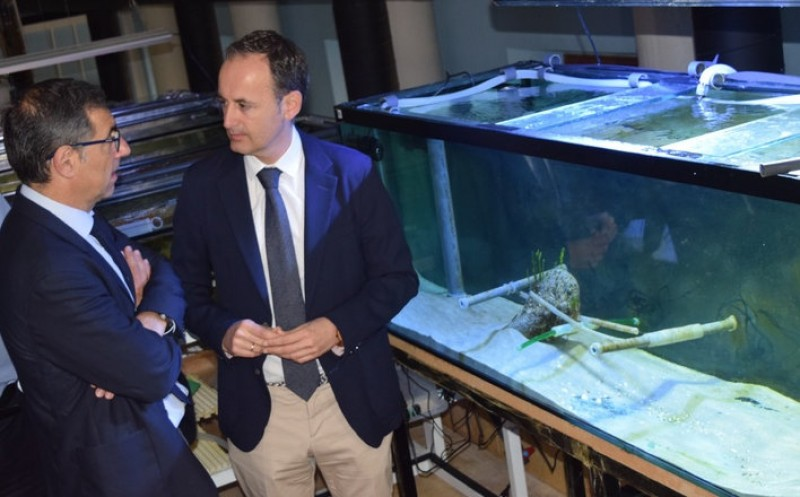 <span style='color:#780948'>ARCHIVED</span> - Seahorses and needlefish could be preserved in a Mar Menor Species bank