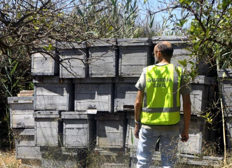 <span style='color:#780948'>ARCHIVED</span> - Murcia beekeepers stung by hive thefts